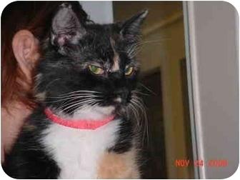 Calico Cat for adoption in Pendleton, Oregon - Sophia