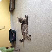 Adopt A Pet :: Iris - Lancaster, MA