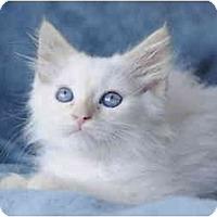 Adopt A Pet :: Parker - Columbus, OH