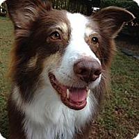 Adopt A Pet :: Georgia - PENDING - Savannah, GA
