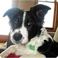 Adopt A Pet :: Autumn - Glenrock, WY