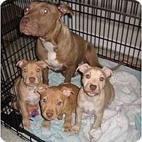 Adopt A Pet :: Eyore - Fort Lauderdale, FL