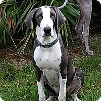Adopt A Pet :: Bailey - Jupiter, FL