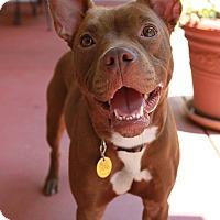 Adopt A Pet :: Lala - Snellville, GA