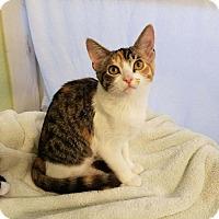 Adopt A Pet :: MSF4 - Alamo, CA