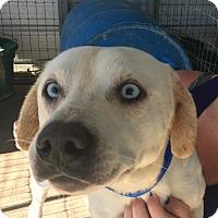 Adopt A Pet :: Alaska - Mexia, TX