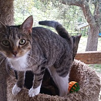 Adopt A Pet :: JoJo - Bronson, FL