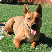 Adopt A Pet :: Esther - Stockton, CA