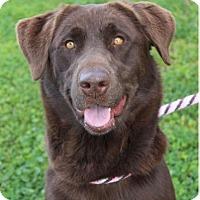 Adopt A Pet :: WILLOW - Red Bluff, CA
