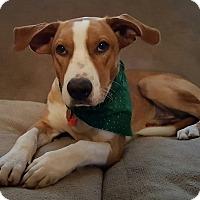 Adopt A Pet :: Petey - Iowa, Illinois and Wisconsin, IA
