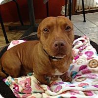 Adopt A Pet :: Gage - Staten Island, NY