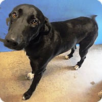 Adopt A Pet :: Bubbie - Redding, CA
