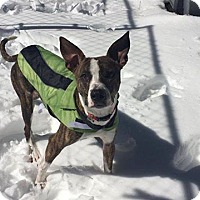 Adopt A Pet :: Freckles - Templeton, MA