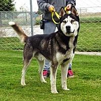 Adopt A Pet :: Jericho - Lathrop, CA