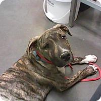 Adopt A Pet :: Orion - Farmington, NM