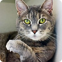 Adopt A Pet :: Pandora - Denver, CO