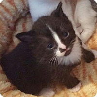 Adopt A Pet :: Alister and Abel - Southington, CT