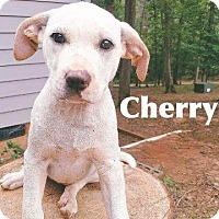 Adopt A Pet :: Cherry - Ellaville, GA