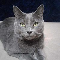 Adopt A Pet :: Phoenix Gunn (Courtesy post) - Dallas, TX