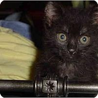 Adopt A Pet :: Bart - Davis, CA