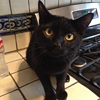 Adopt A Pet :: Alejandro - Dallas, TX