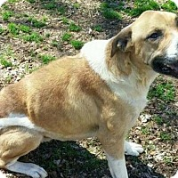 Adopt A Pet :: Perrin - Orlando, FL