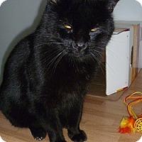 Adopt A Pet :: Nero - Hamburg, NY