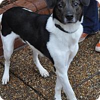 Adopt A Pet :: Beauregard - Atlanta, GA