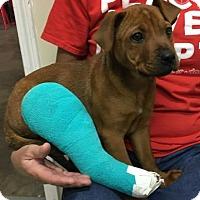Adopt A Pet :: Penny - Centerville, GA