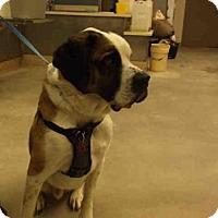 Adopt A Pet :: COOPER - Rockford, IL