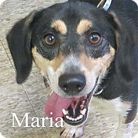 Adopt A Pet :: Maria - Warren, PA