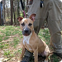 Adopt A Pet :: Diamond - Alpharetta, GA