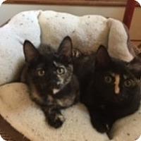 Adopt A Pet :: Coral & Belle - Pasadena, CA