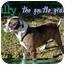 Photo 1 - Boxer/American Bulldog Mix Dog for adoption in Lakeland, Florida - Bully