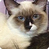 Adopt A Pet :: Azreel - Monroe, GA