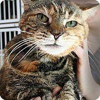 Adopt A Pet :: Ziggy - Secaucus, NJ