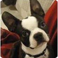 Adopt A Pet :: Kingsley - Beachwood, OH