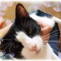 Adopt A Pet :: Tom - Scottsdale, AZ
