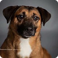 Adopt A Pet :: Zee Bee - Memphis, TN