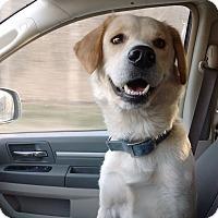 Adopt A Pet :: Stoli - Bowie, MD