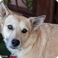 Adopt A Pet :: McDusty O'Doodle - Tucson, AZ