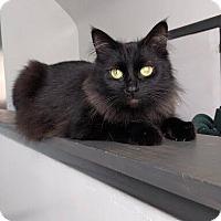 Adopt A Pet :: Kathy - Livonia, MI
