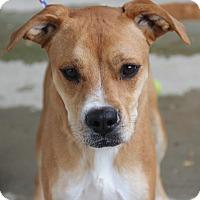 Adopt A Pet :: Chassity - Greensboro, NC