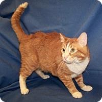 Adopt A Pet :: Ivan - Colorado Springs, CO