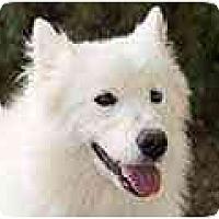 Adopt A Pet :: Sasha - Arvada, CO