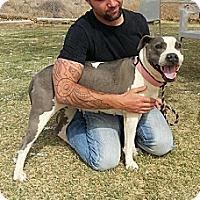 Adopt A Pet :: Lilly - Alamogordo, NM