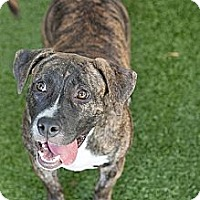 Adopt A Pet :: Sunday - Mission Viejo, CA