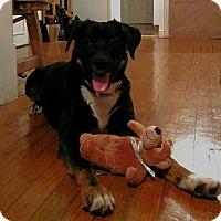 Adopt A Pet :: Mitchell - Hamilton, ON