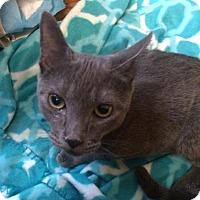 Adopt A Pet :: Vladimir the romantic russian - McDonough, GA