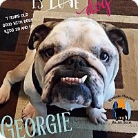Adopt A Pet :: Georgie - Santa Ana, CA